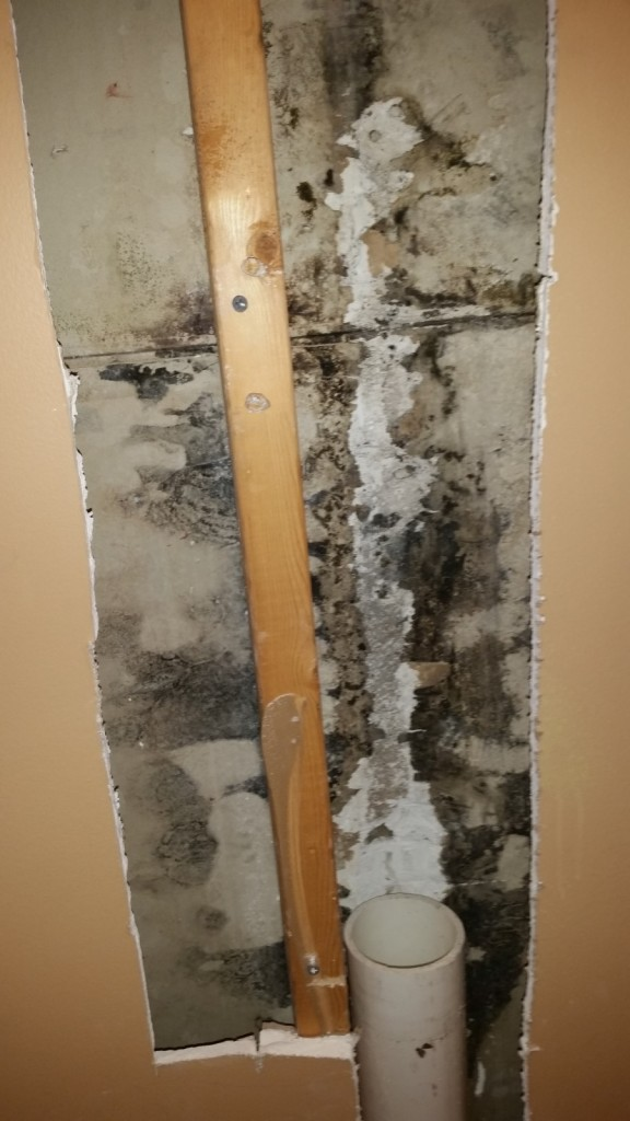 6 months of mold growth on drywall in Louisville KY